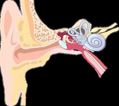 ear pixabay